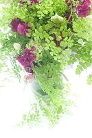 アジアンタムと紫のブーケ