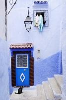 モロッコ シャウエン 猫
