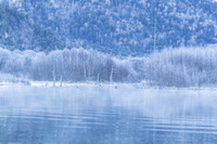 長野県 霧氷つく上高地 大正池