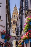 スペイン コルドバ 花の小道