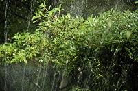 庭木への自動潅水()
