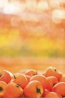 山梨県 収獲したての柿