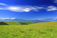 長野県 諏訪市 霧ヶ峰高原のニッコウキスゲと山並み 青空