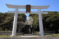 茨城県 大洗 磯前神社 サクラ