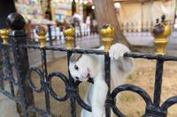 フェンスにしがみつく子猫