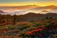 長野県 美ヶ原 レンゲツツジと雲海の朝焼け