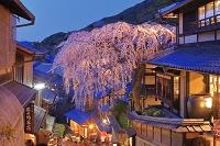 京都府 桜咲く春の三年坂