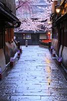 日本 京都府 早朝の祇園白川の桜と巽橋