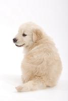 背中を見せる子犬