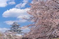 岐阜県 桜咲く墨俣城