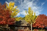 山梨県 富士河口湖町 西湖いやしの里根場の茅葺き民家とカエデ...