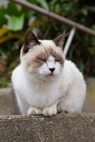福岡県 藍島の猫