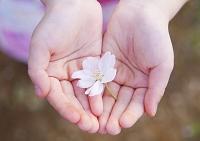 サクラの花を持つ手