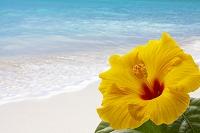 ハイビスカスと常夏の海