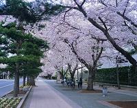 駒街道、日本の道百選