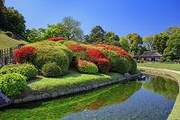 岡山県 キリシマツツジ咲く岡山後楽園から廉池軒