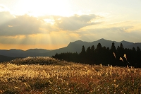 奈良県 夕暮れの曽爾高原のススキ