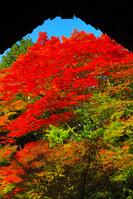 京都 実相院の紅葉