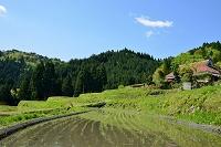 滋賀県 畑の棚田