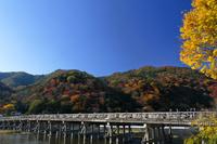 紅葉の嵐山