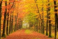 オランダ 紅葉する秋の並木道