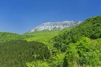 鳥取県 新緑の大山