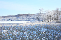 北海道 積雪の塘路湖風景