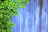 岩手県 八幡平 松川の堰堤