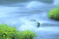 青森県 奥入瀬 三乱の流れ 若草と流れ