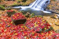 岐阜県 紅葉の宇津江四十八滝 平滝