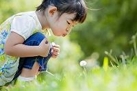公園でタンポポの綿毛を吹く女の子