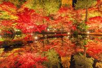日本 岐阜県 紅葉の曽木公園ライトアップ