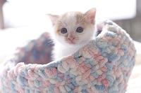 手編みの籠から身を乗り出す仔猫