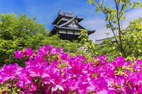 奈良県 ツツジと大和郡山城