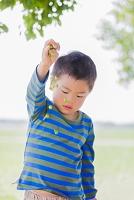 木の実で遊ぶ日本人の男の子