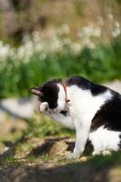 洗顔する猫