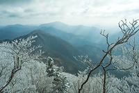 奈良県 高見山 霧氷