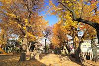 埼玉県 浮島稲荷神社の紅葉
