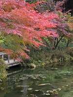 岐阜県 関市のモネの池