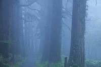 山形県  羽黒山杉並木