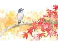 小鳥と紅葉