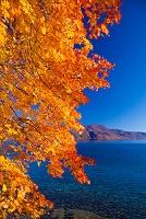 秋田県 十和田湖畔紅葉と御鼻部山