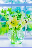 窓辺の花 白と黄色のユリ