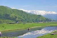 長野県 機械による田植えと北アルプス