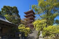 高知県 新緑の竹林寺五重塔