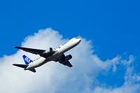 飛行機 全日空貨物