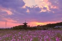 奈良県 法起寺と夕景