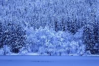 長野県 北竜湖の雪景