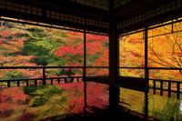 日本 京都府 瑠璃光院 瑠璃の庭の紅葉