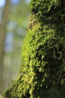 北八ヶ岳 苔の森 白駒の森